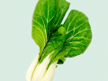 Pak Choi