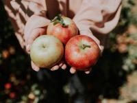 Warum Äpfel gesund sind