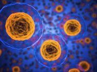 Autophagie – Selbstreinigung der Zellen