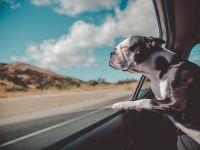 Plitsch! Platsch! 10 Produkte für die Abkühlung von Mensch und Tier