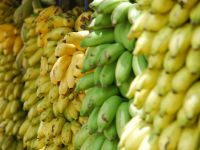 Öko-Test zeigt: Bananen sind stark pestizidbelastet