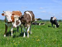 Biomilch & Biofleisch enthalten mehr Omega-3-Fettsäuren