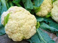 Blumenkohl: kalorienarm & magenfreundlich