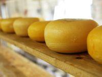 Tierisches Lab: In welchem Käse steckt es?