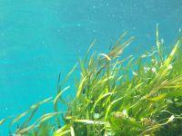 Essbare Verpackungen aus Algen