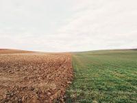 Folgen der Dürre: Biobetriebe dürfen konventionell füttern