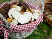Gesunde Herbstboten: Essbare Pilze