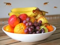 10 Fallen, die Fruchtfliegen keine Chance lassen