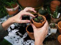 Gärtnern leicht gemacht: Die Top 16 Garten-Produkte