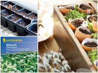 Kräuter und Gemüse vorziehen auf der Fensterbank