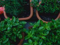 Unsere Top Five Helfer für Ihren Kräutergarten in der Wohnung