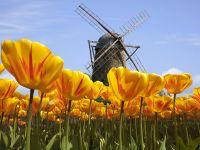 Diese 11 typischen Gerichte müssen Sie in Holland probiert haben
