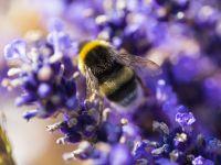 Hummeln und Bienen helfen
