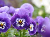 Ganz schön lecker: essbare Blüten
