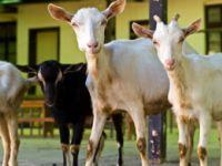 Bio-Tierhaltung: Ein besseres Tierleben?