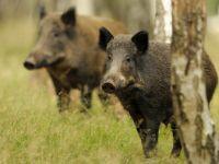 Wissenswertes über Reh, Wildschwein, Fasan & Co.