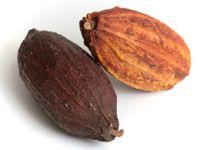 Köstlichkeit aus Mexiko: Kakaobohne