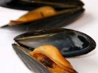 Darf man heute noch Muscheln essen?