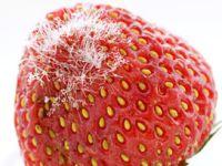 Was tun, wenn Obst angefault ist?