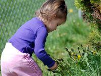Wildkräuter-Schatzsuche mit Kindern