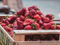 Frische Erdbeeren richtig lagern