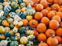 Hokkaido, Butternut und gelber Zentner: 10 tolle Produkte für die Kürbissaison