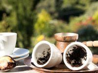 Kaffeesatz: 5 Hacks für den Garten