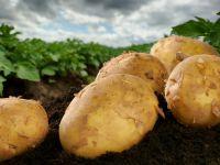 6 gute Gründe, warum die Kartoffel im Kochtopf eine tolle Figur macht