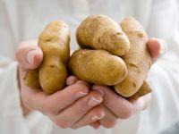 Kartoffeln sind wahre Allrounder