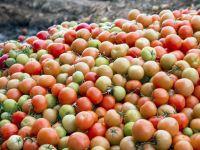 Haufen mit grünen, blassen und roten Tomaten