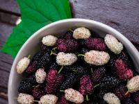 4 Gründe: Darum sind Maulbeeren gesund