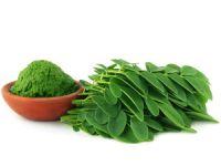 Wunderbaum Moringa – gesünder als jedes Obst oder Gemüse