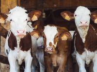 Öko-Test: Günstiger Quark auf Kosten der Milchkühe