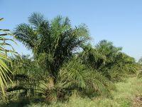 Rewe Österreich schafft Palmöl ab