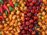 Plastikfreies Einkaufen durch natürliches Labeling
