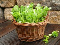 5 Gemüsesorten, die schon vor 100 Jahren fit gemacht haben