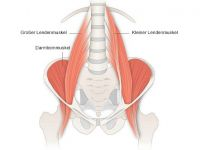 Psoas-Muskel: Kleiner Muskel, große Wirkung