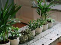 5 Pflanzen für ein gutes Raumklima