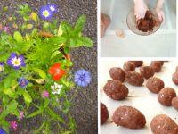 So gestalten Sie Ihren Garten oder Balkon bienenfreundlich