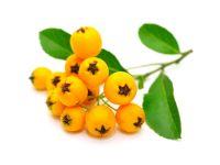 8 vitaminreiche Lebensmittel aus aller Welt