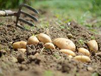 Slow Food pflegt die Kultur verantwortungsvollen Essens und Trinkens