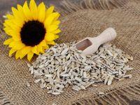 Bio-Sonnenblumenkerne zurückgerufen