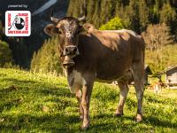 Schweizer Käse: Entdecken Sie die einzigartige Spezialität