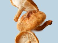 Shiitake-Pilze