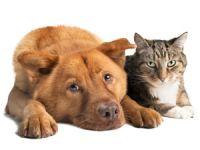 Vegetarische Ernährung für Haustiere  – sinnlos oder sinnvoll?