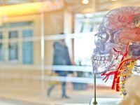 Neue Studie: Übergewicht durch Störung im Gehirn?