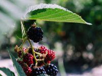 Wildobst sammeln: Infos & Tipps