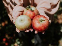 Apfelesser leben offenbar gesund und nehmen weniger Medikamente zu sich. © Glamy - Fotolia.com