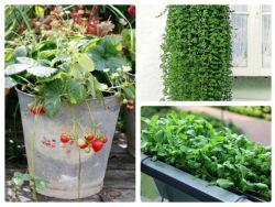Schattenpflanzen Balkon