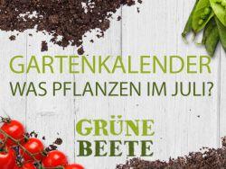 Was pflanzen im Juli